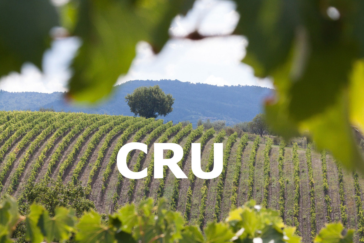 Che cosa significa il termine Cru